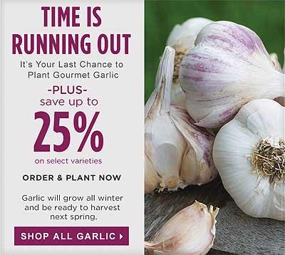 Garlic from Burpee