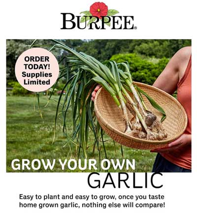 Burpee Seed Compnay