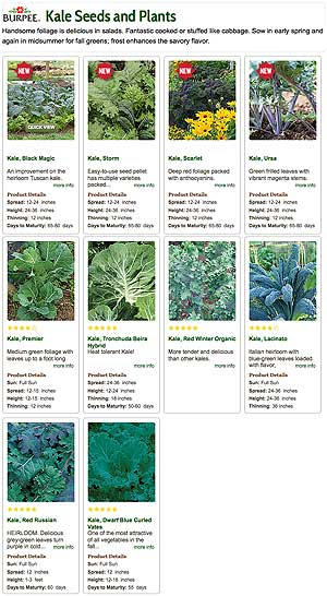 Kale Plants and Seed from Burpee Gardening
