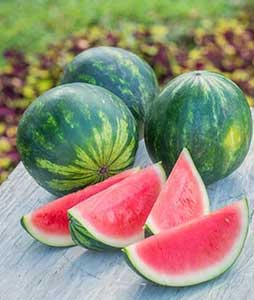 Mini Piccolo Hybrid Watermelon