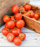 Oh, Happy Day Hybrid tomato
