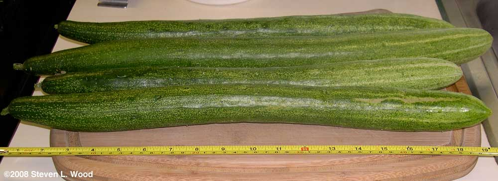 Japanese Long Pickling Cucumbers