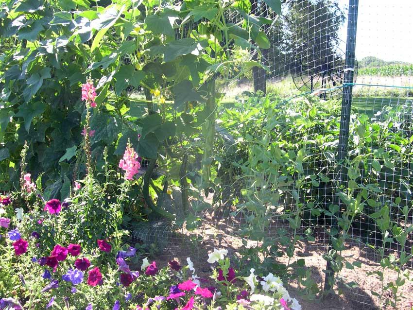 JLPs in garden