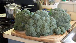 Three heads of broccoli