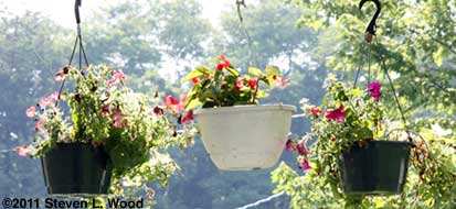 Even more hanging baskets