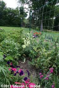 Flowers amongst veggies