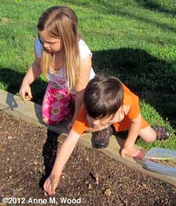 Grandkids picking asparagus