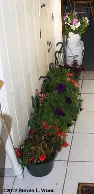 plants lining kitchen wall