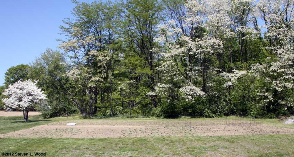 East Garden - April, 2012