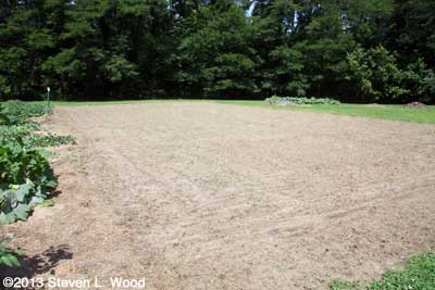 Buckwheat patch after second tilling