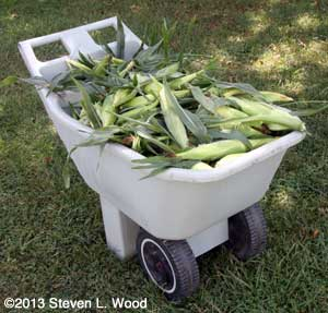 Cart of sweet corn