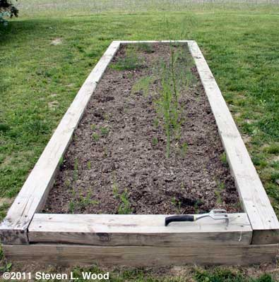 Narrow asparagus bed