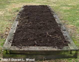Asparagus patch covered with compost