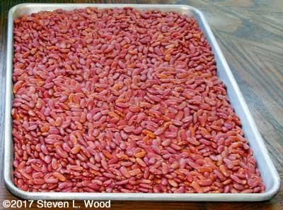 Kidney beans drying