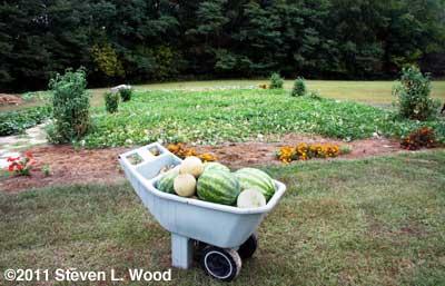 2011 Melon Patch