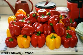 Peppers - 2011