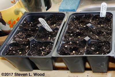 Peppers seeded to deep sixpack inserts