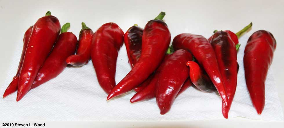 2019 -Hungarian Spice Paprika Peppers