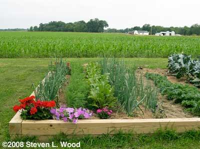 Intensive planting