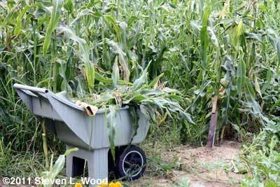 Corn knife and cart of chopped corn stalks
