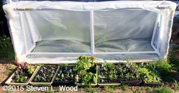 Cold frame fully open