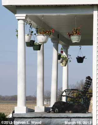 Hanging baskets around porch