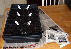 Seeding vinca