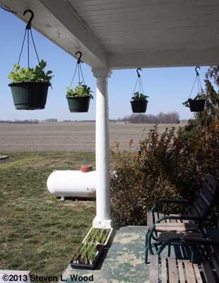 Plants on porch