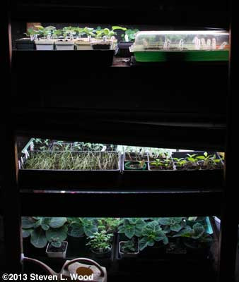 Loaded plant rack