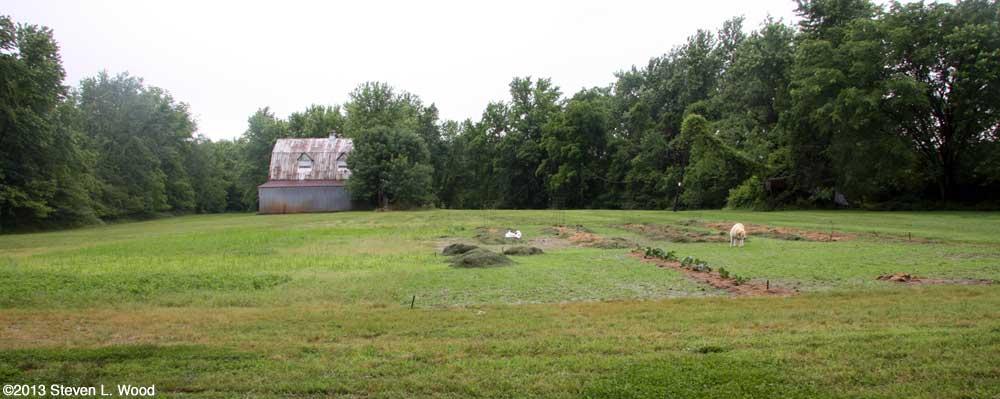 East Garden - May 31, 2013