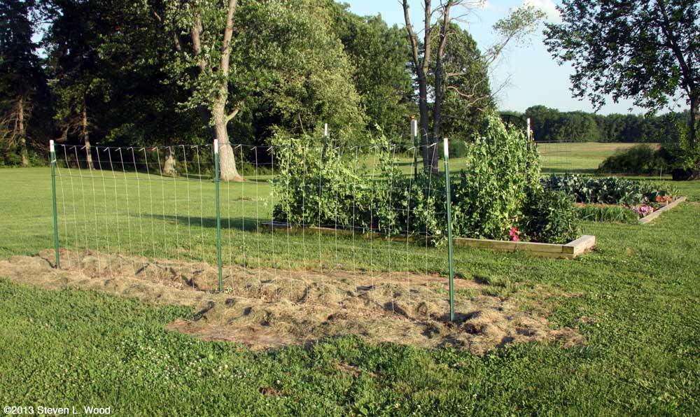 Pea Trellis and main garden plot
