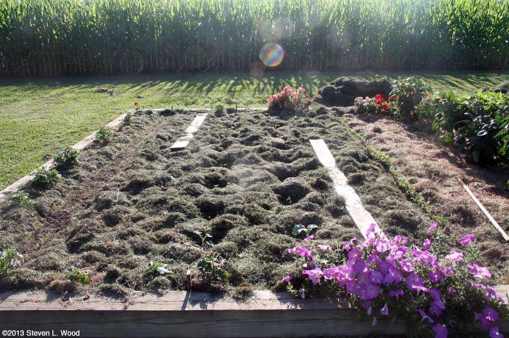 Mulched brassicas, kale, and carrots