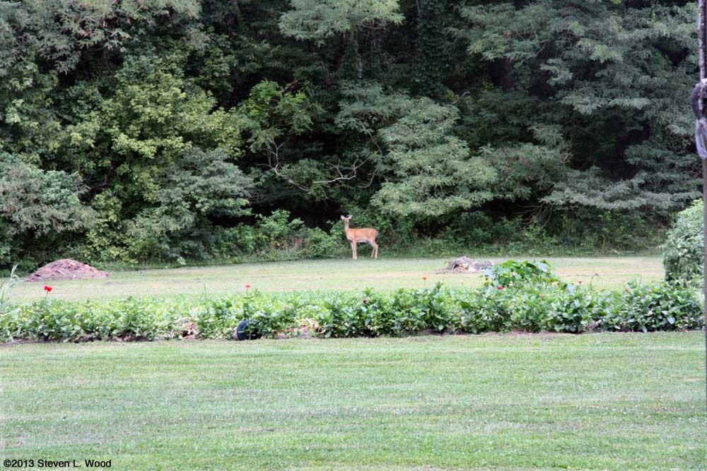 Doe eyeing East Garden