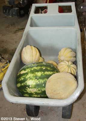 Cart of melons