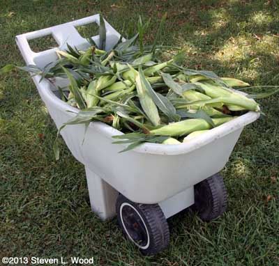 Cart of sweet corn