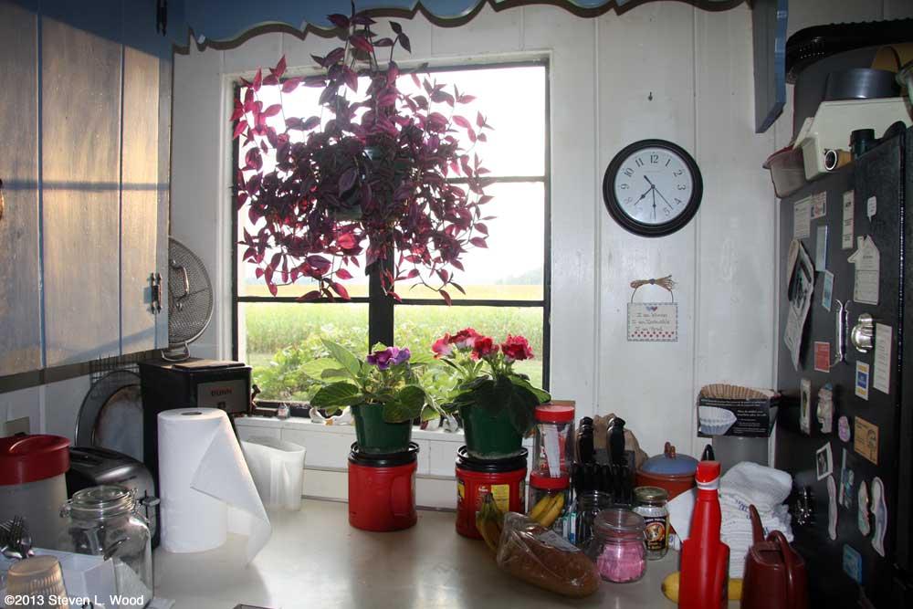 Gloxinias in kitchen window