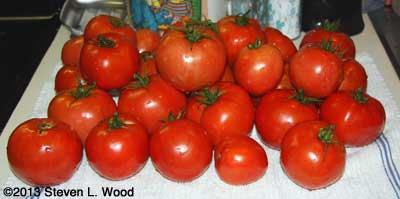 Quinte tomatoes