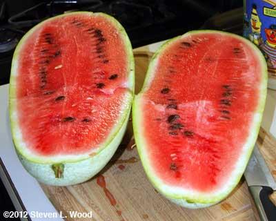 Ripe Ali Baba watermelon
