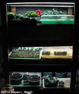 Plant rack - January 2, 2014