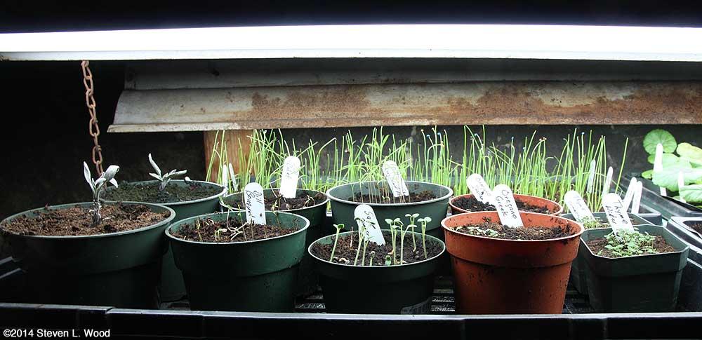 Tray of herbs
