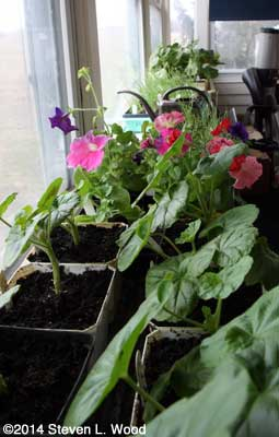 Plants on sunroom shelves
