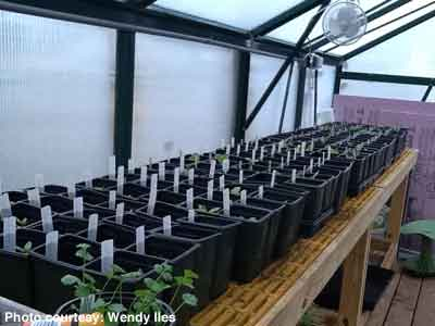 Window blind labels in greenhouse