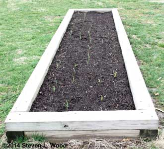 2010 Narrow Raised Bed
