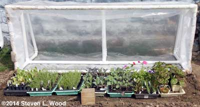 Plants in cold frame
