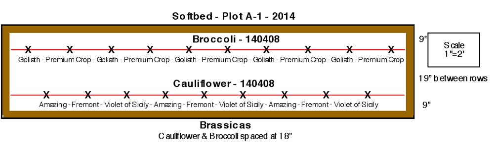 Brassica plot diagram