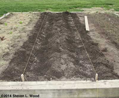 Six inch wide bean rows