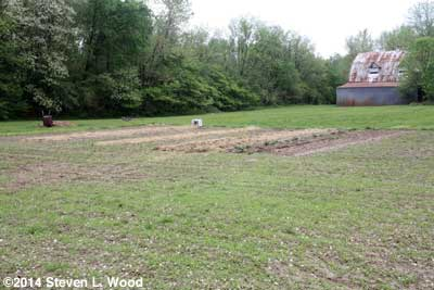 Alfalfa emerging in East Garden