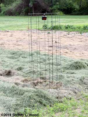 Nite-Guard on tomato cage
