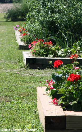Flowers edging raised beds