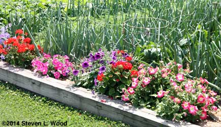 Flowers edging main bed
